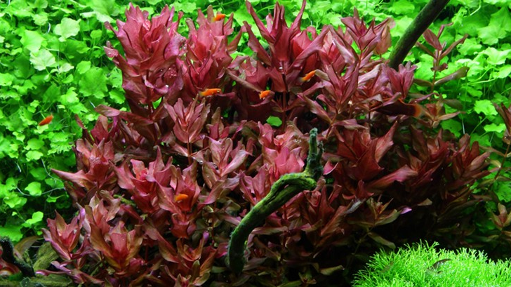 Simple aquascape aquatic plants for Easy pond plants