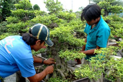 ảnh hưởng độ ẩm đến phát triển cây