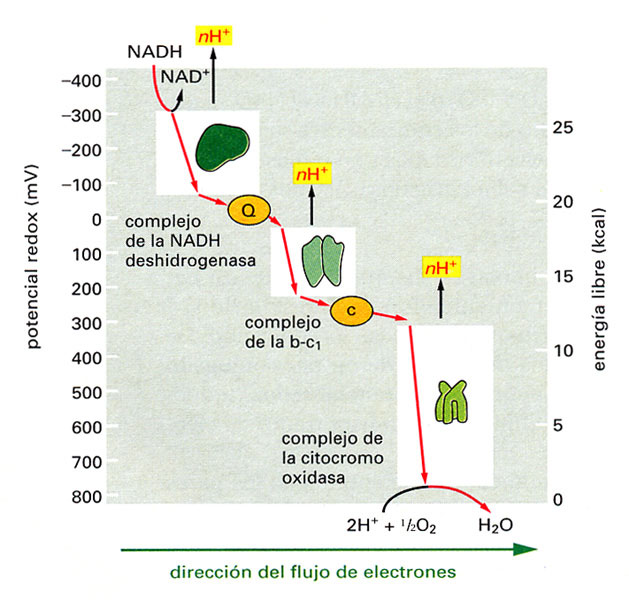 proteina transportadora de esteroides
