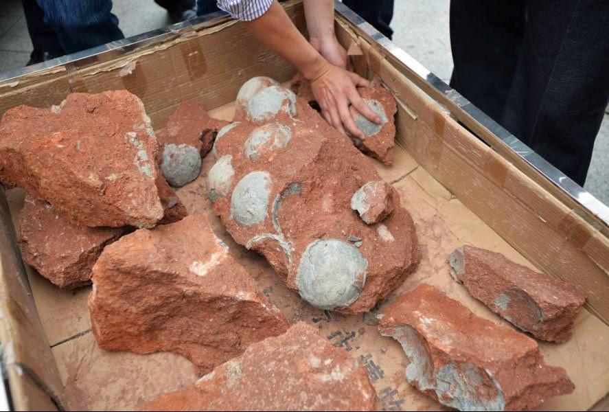 Heboh, Penggali Gedung Di China Menemukan 43 Telur Dinosaurus
