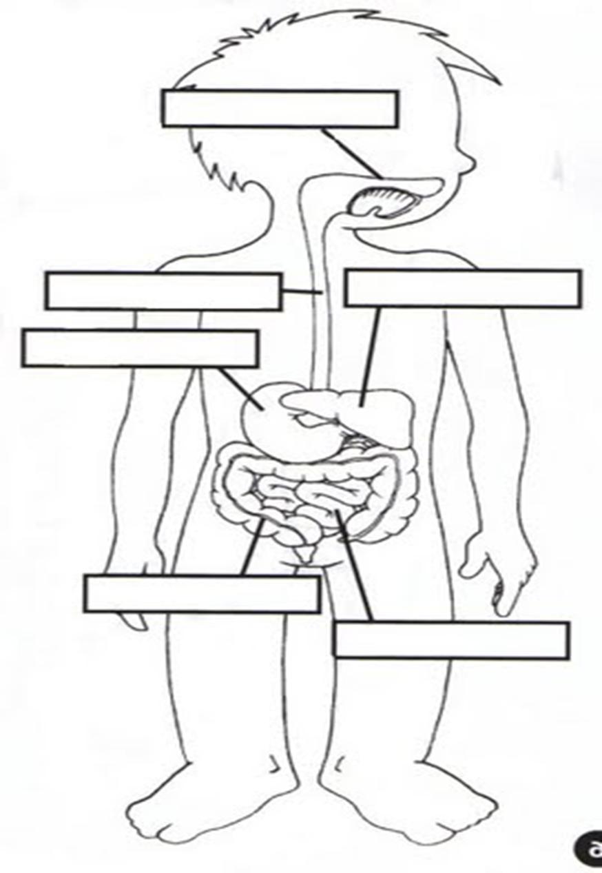 didáctica de las ciencias naturales: MICROPRÁCTICA N°2- APARATO ...