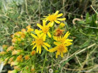 Βιολογικός έλεγχος επιβλαβών εντόμων με βιοποικιλότητα