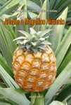 Ananás o Magnífico Alimento