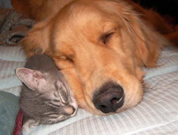 Δεν μπορούμε να διαχωρίσουμε τους καλύτερους φίλους