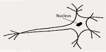Ncert solutions for class 8th ch 8 cell structure and functions ncert solutions for class 8th ch 8 cell structure and functions science ccuart Images