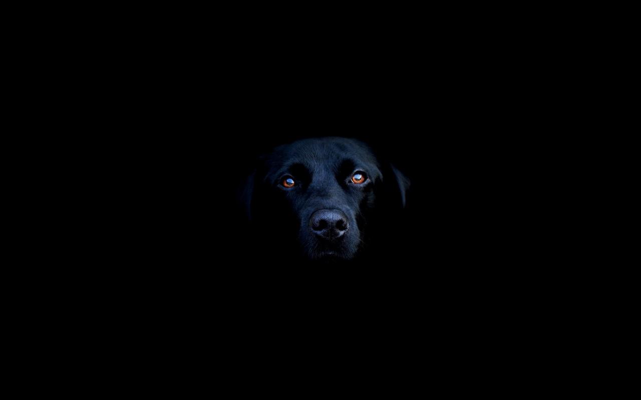 http://2.bp.blogspot.com/-VD4djf8QQoI/TlALqItPn1I/AAAAAAAAAHw/PueTQ2qoeDU/s1600/Black-dog-wallpaper-6.jpg