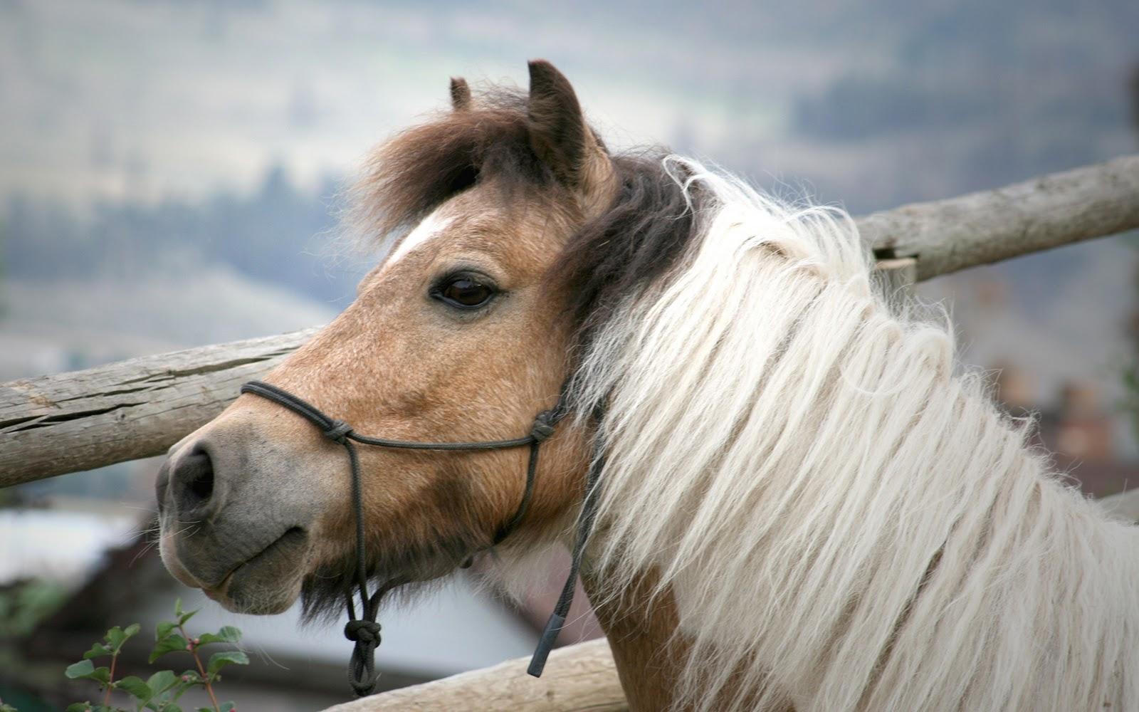 Simple   Wallpaper Horse Flicka - Horses+Wallpapers+1920x1200-2  Pictures_488160.jpg