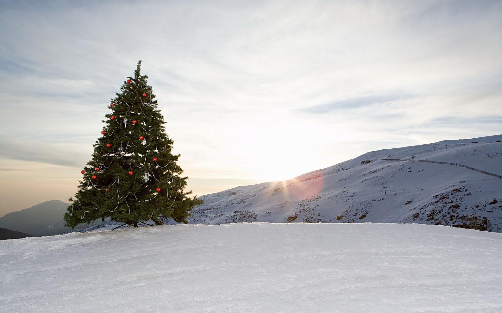 http://2.bp.blogspot.com/-VDCl99Cwa8g/UM7v2595FrI/AAAAAAAAIto/M3cZhRyylsA/s1600/een-witte-kerst-wallpaper-met-een-opgetuigde-kerstboom.jpg