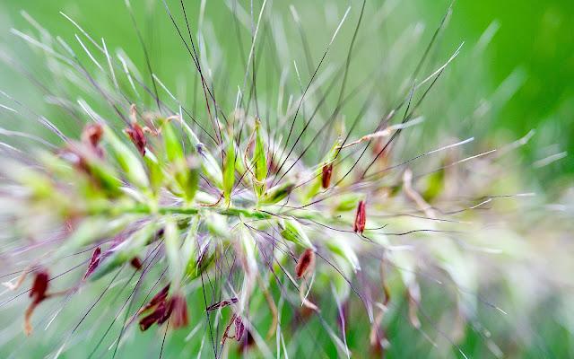 Hình nền hoa cỏ mùa xuân đẹp nhất cho máy tính