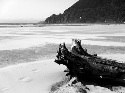 Driftwood sculpture on Pacific Coast beach, OR