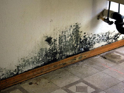 mold testing virginia testing methods to test black mold in virginia. Black Bedroom Furniture Sets. Home Design Ideas