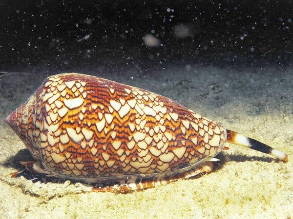 criaturas marinas conus textile