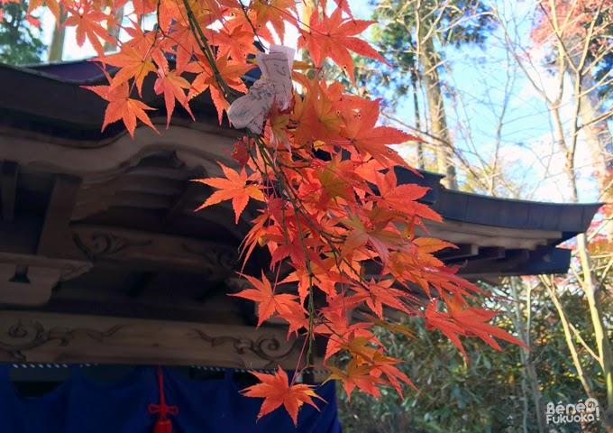 Erables japonais, momiji et omikuji