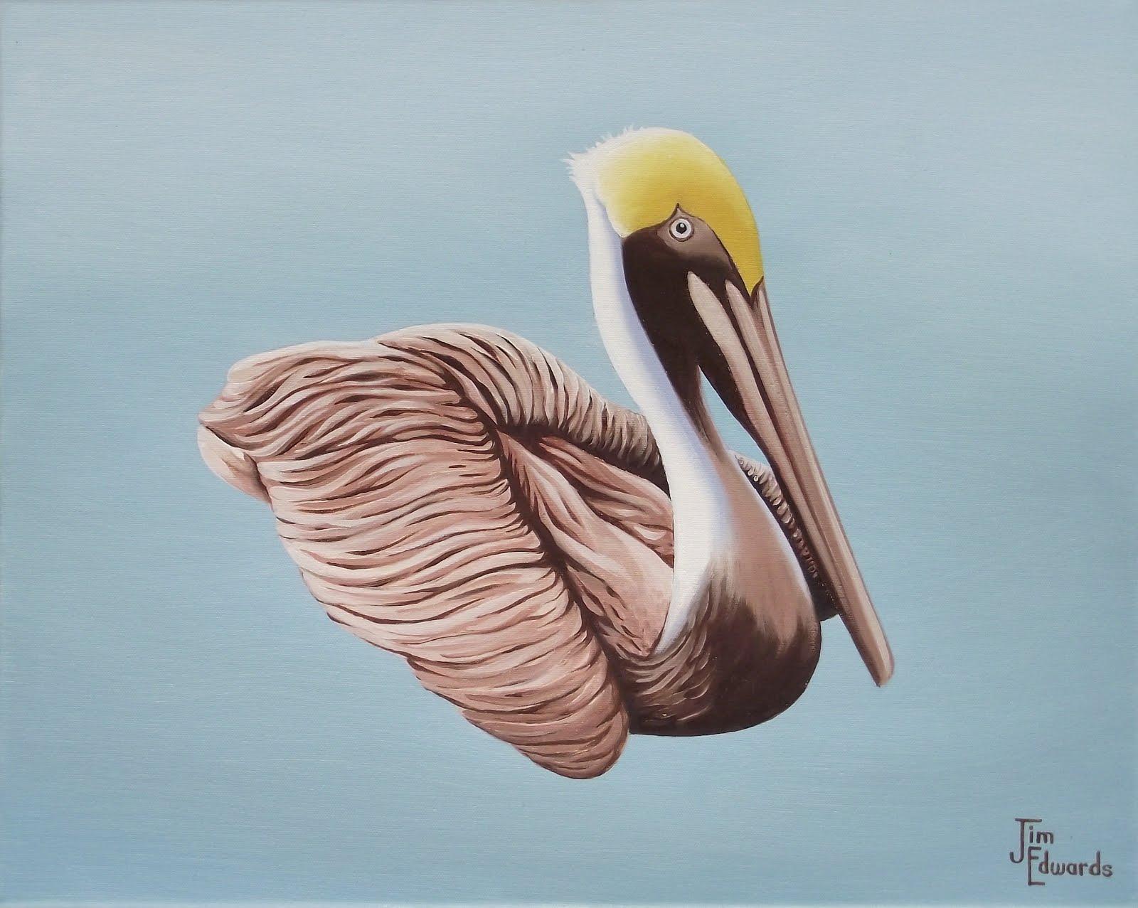 Lone Pelican 16 x 20
