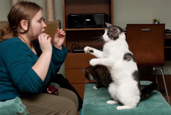 Kissan yksilölliset piirteet vaikuttavat tempputassuiluun.