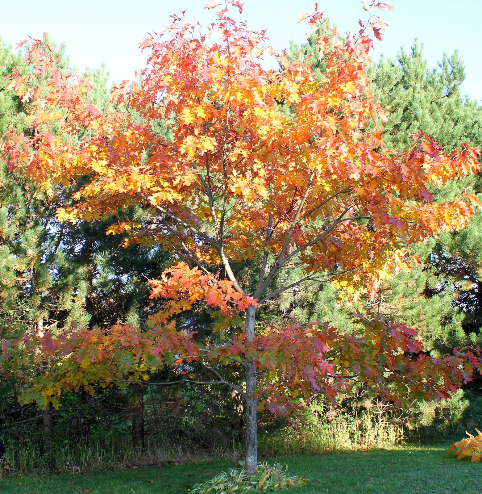 garden club of pei  pruning tips