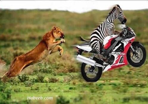 wonderful animal videos