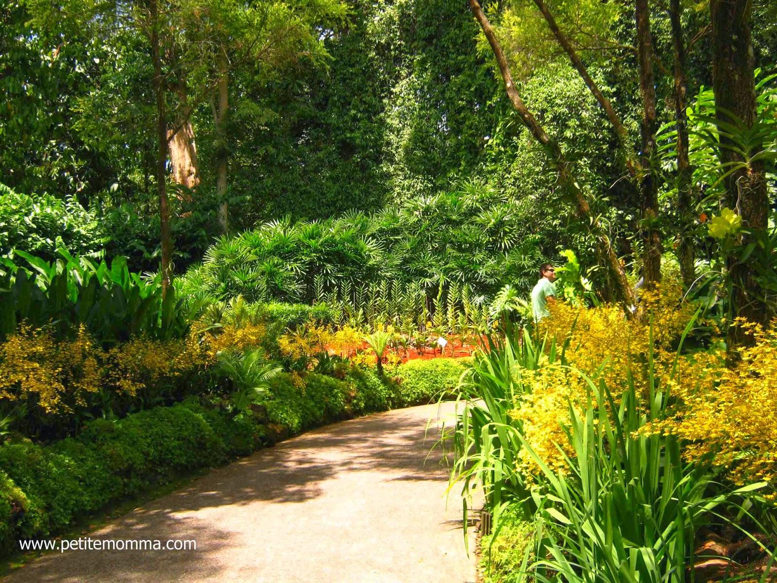 Singapore National Orchid Garden, Botanic Garden