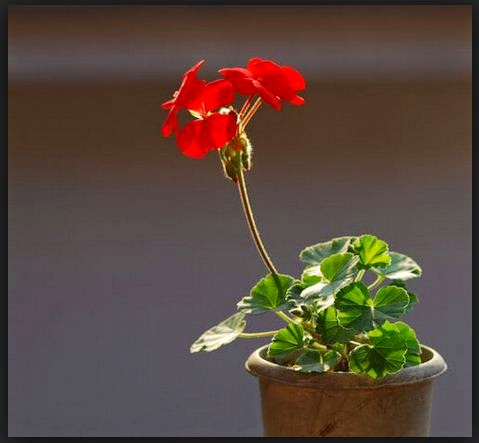 Cara Budidaya Bunga Agar Menghasilkan