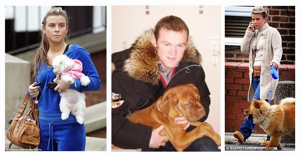 Wayne Rooney Dog soccer players with their favourite dogs Name Place Animal Thing