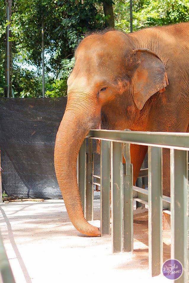 #elephant #gajah
