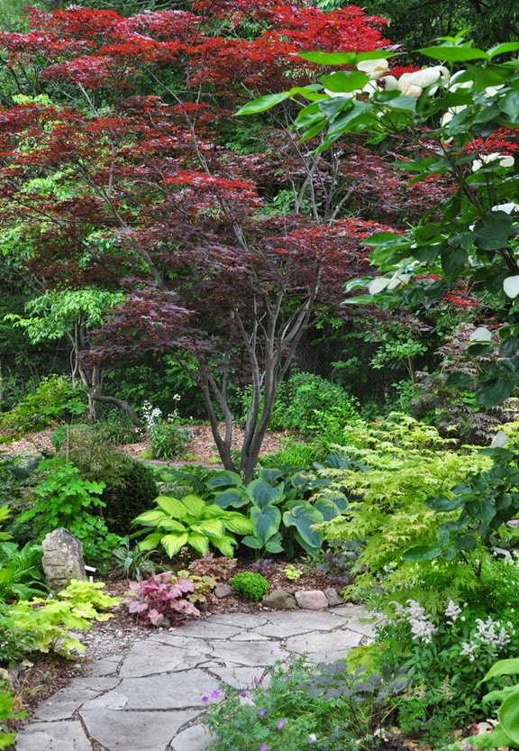 Three dogs in a garden japanese maples for Japanese outdoor plants