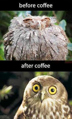 Funny animal with coffee