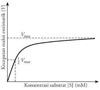 Hubungan konsentrasi substrat kecepatan reaksi enzimatik