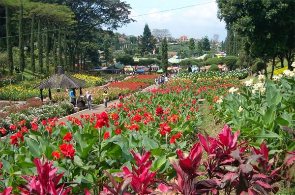 Para penggemar tanaman bunga wajib datang ke Kebun Bunga Cihideung Bandung
