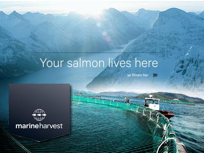 Производство Marine Harvest в Канаде и Шотландии растет