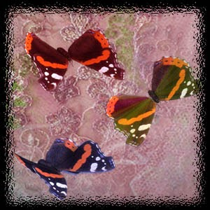 http://2.bp.blogspot.com/-VFXF7tP1tT4/U9HlyeJ1O0I/AAAAAAAACy8/NuUYlmPP_M8/s1600/Mgtcs__Moths.jpg