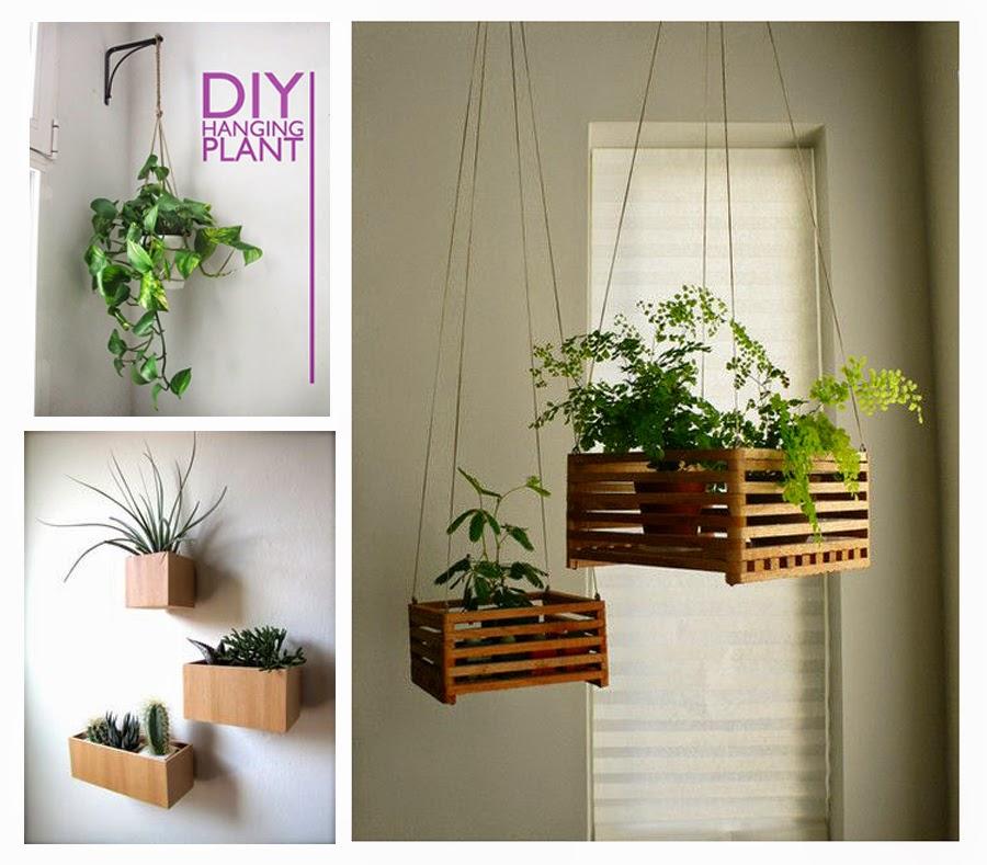 Alessandra piante - Piante in camera ...