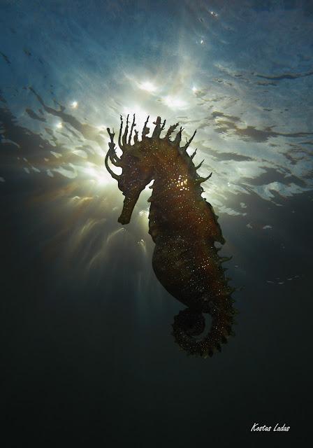 Υποβρύχιες εικόνες -Κώστας Λαδάς