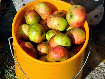 Äpfel, die darauf warten gekeltert zu werden