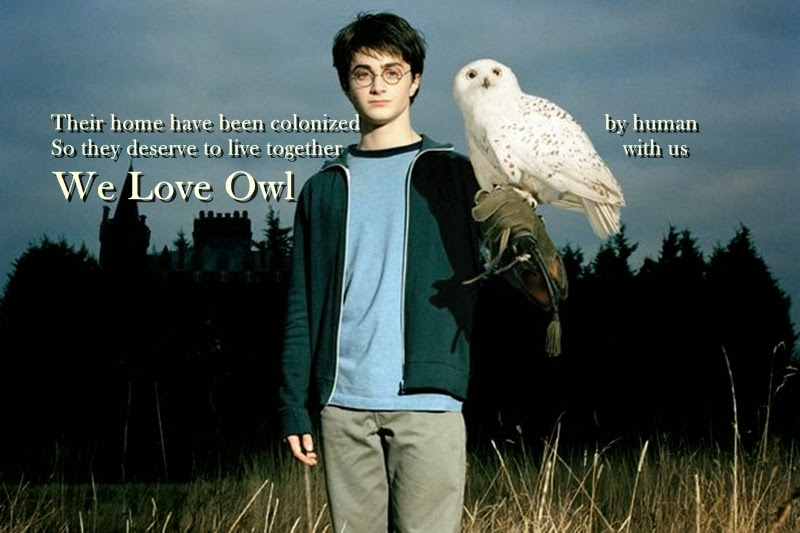 We Love Owl