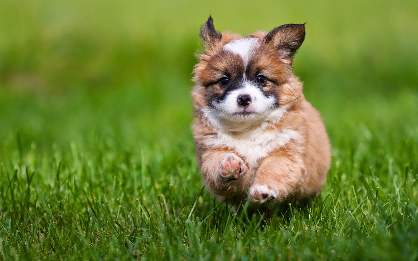 Best Grass For Dogs To Eat