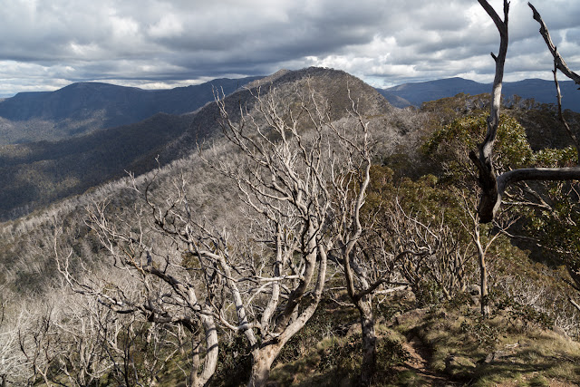trees and mount buggery alpine national park