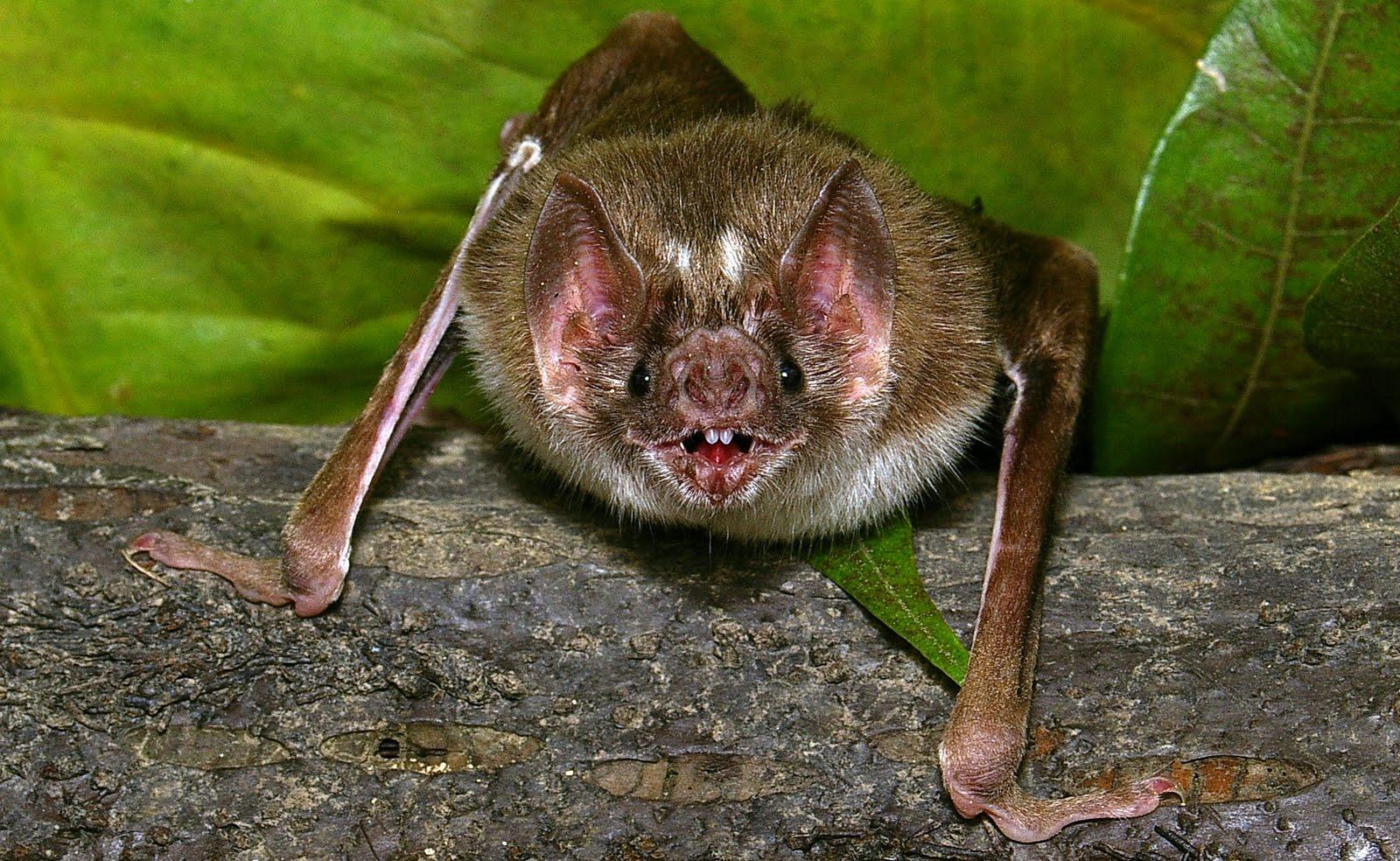 Araucaria comment les vampires rep rent ils leurs proies - Comment les cambrioleurs reperent ...