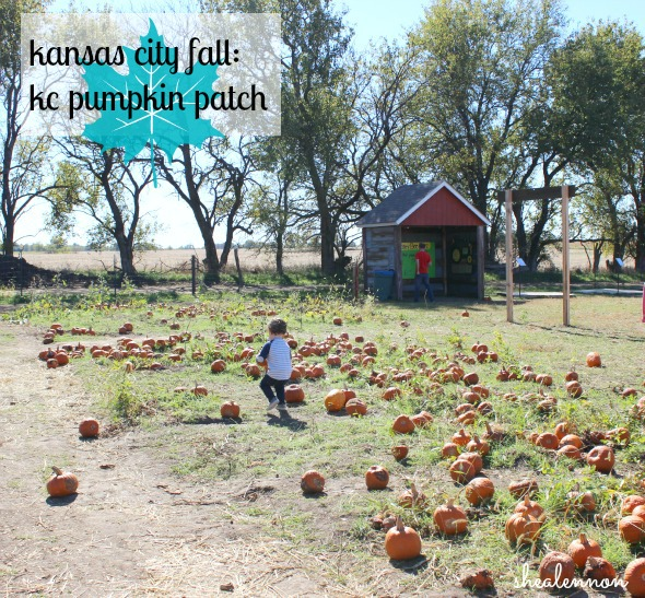 KC Pumpkin Patch - a must-visit for fall | www.shealennon.com
