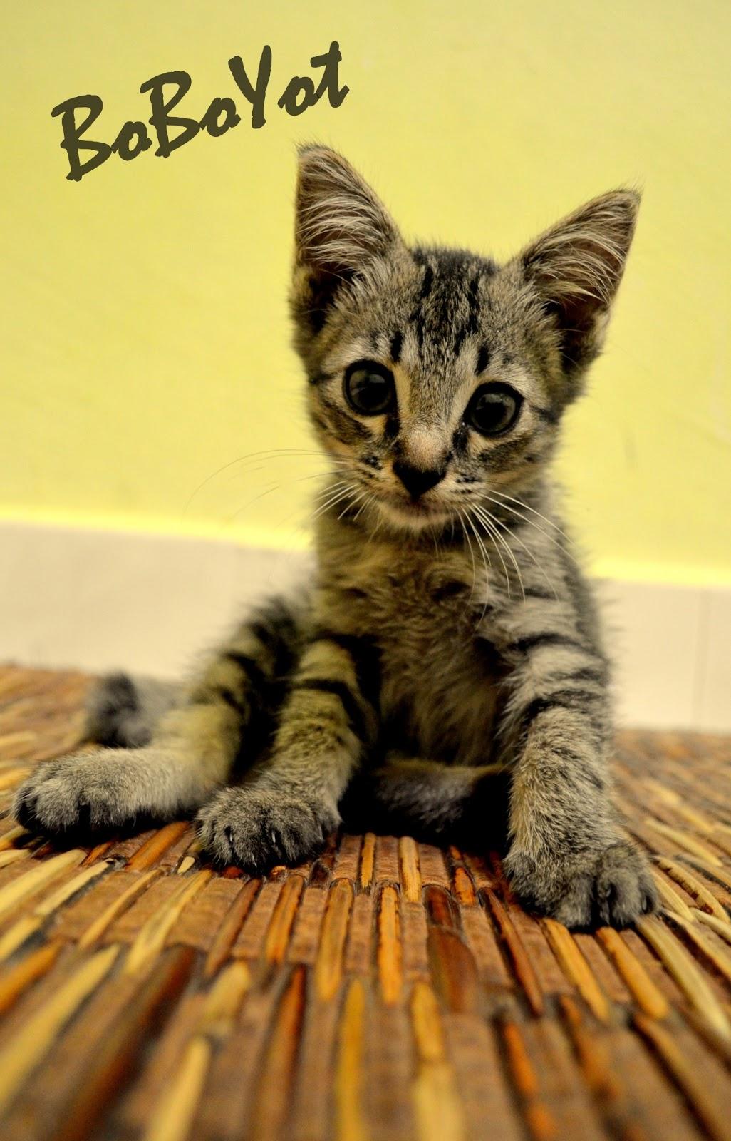 Dakwah Hidupku Kisah Kucing Kucing Saya