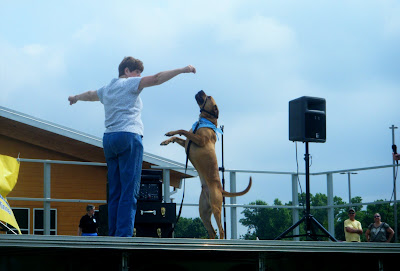 a big muscular tan dog stands on his hind legs, reaching up for his handler's hand