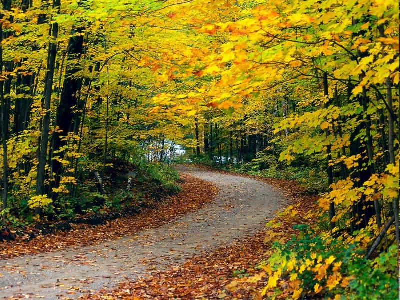 camino-zen-armonizando-tu-vida