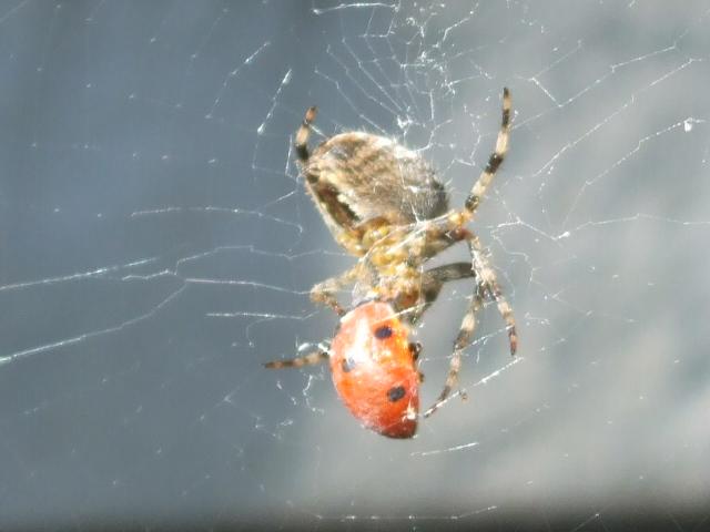 蜘蛛 の 巣 に 引っかかる