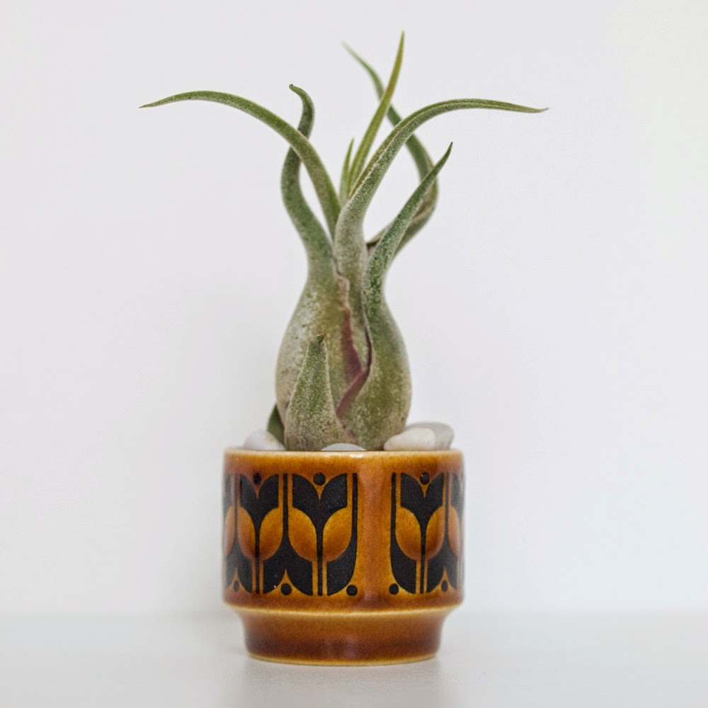 Airplant in Hornsea Egg Cup