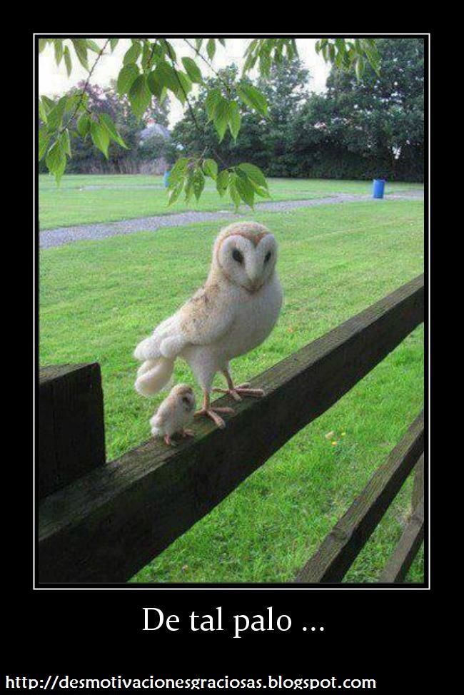 Imagenes divertidas - imagenes graciosas - Fotos graciosas
