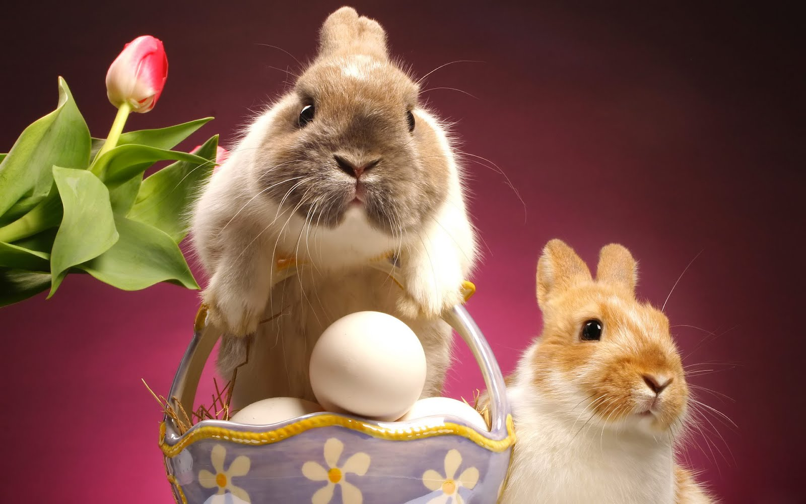 6 cute bunny rabbit easter wallpapers for desktop free
