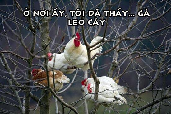 Hình ảnh động vật hài hước mới nhất