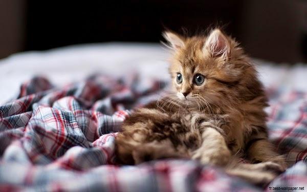 Photo chaton mimi