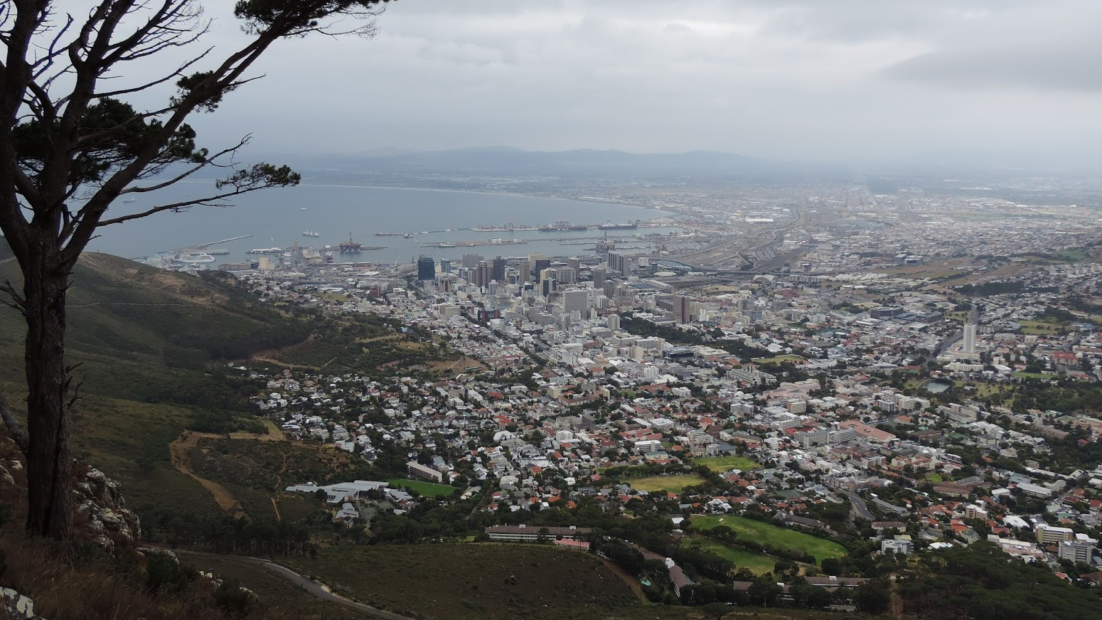 Travel with kevin and ruth stunning hike up lions head mountain great views of cape town sure makes you wonder how a tree manages to grow up here publicscrutiny Images
