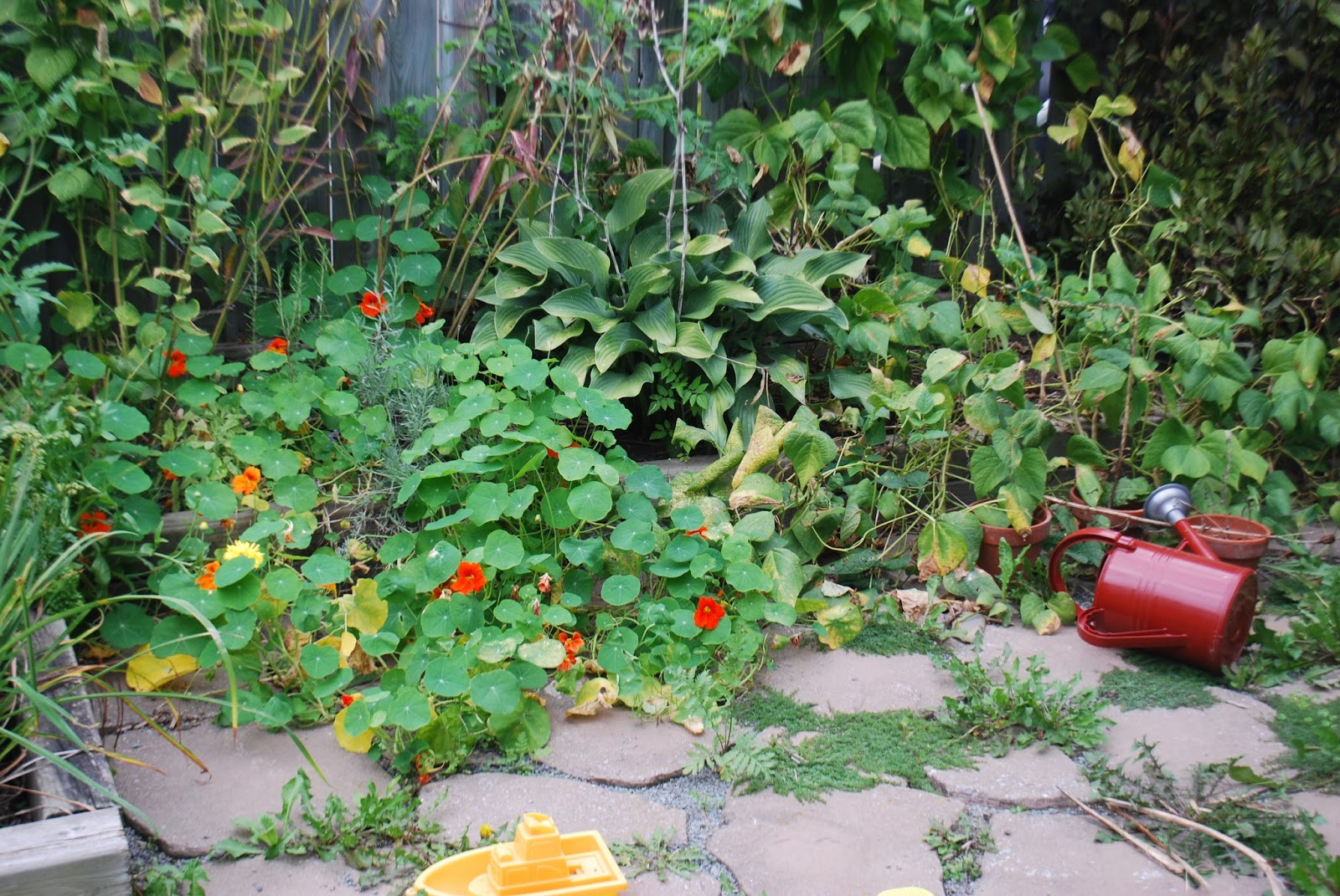 3 Gardens In Quebec The cheerfulness and bounce of nasturtium